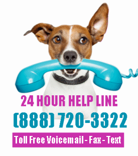 24 hour toll free help line for dog rehoming and adoption small